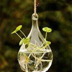 Rainbaw. M Type de Suspension Transparente Goutte d'eau Type d'eau la Culture Vase de la marque RAINBAW.M image 1 produit